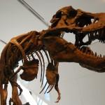 Dinosaur boneyard